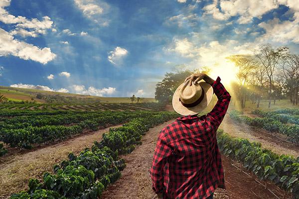 ThuthukaSA Farming